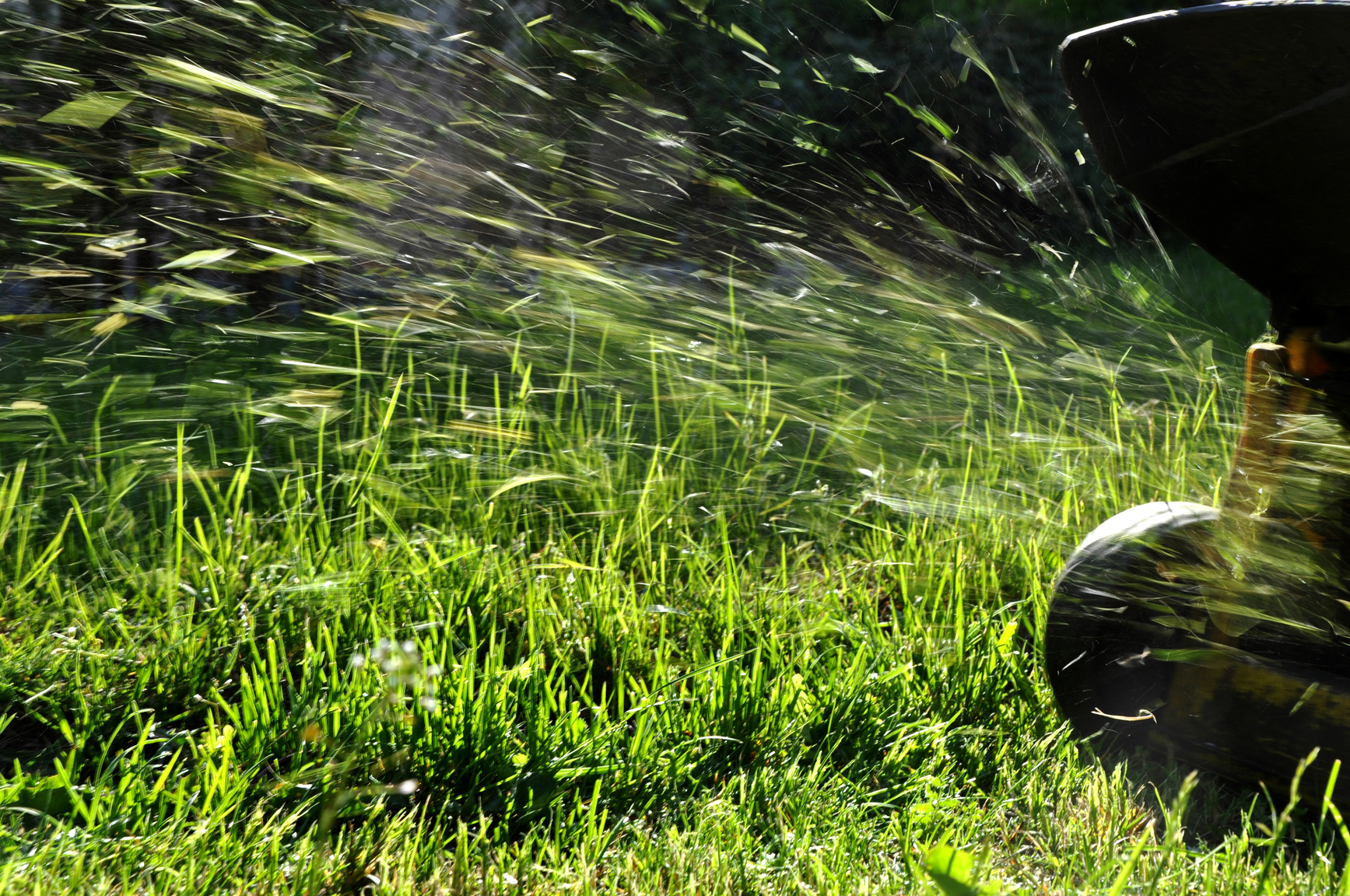 Green grass clippings from lawn mowing services Brisbane - GreenSocks