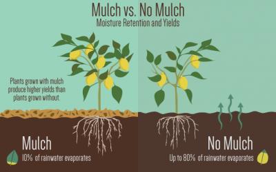 Should I Use Mulch In My Garden?