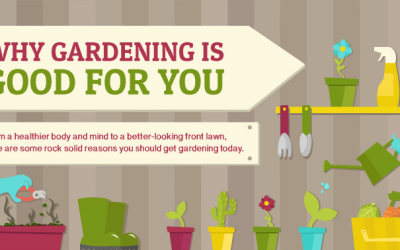Top 3 Reasons Why Gardening Is Good For You