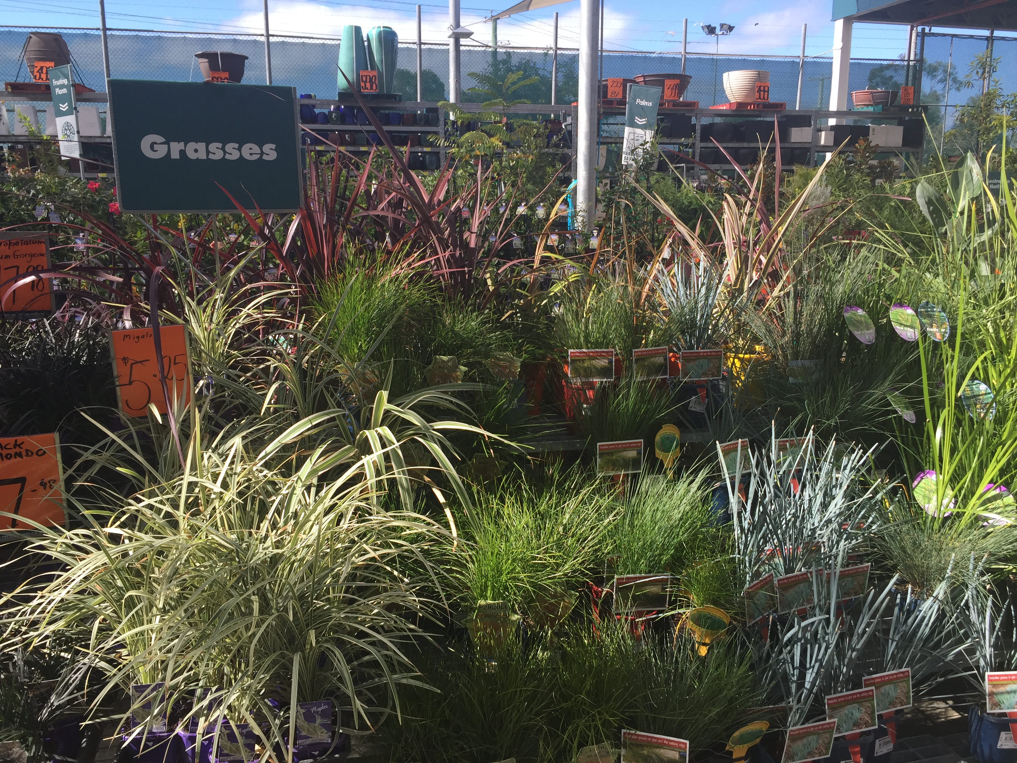 Grass for sale at Bunnings Morayfield © GreenSocks