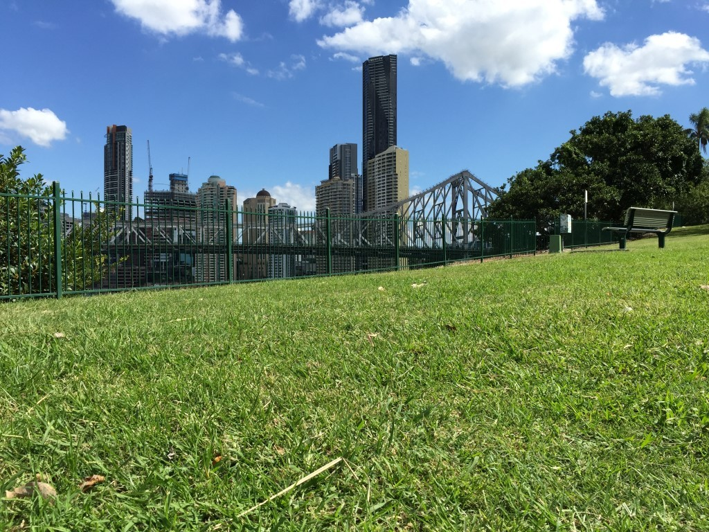 My favourite photo of the day. Lush lawn contrasting Brisbane skyscrapers