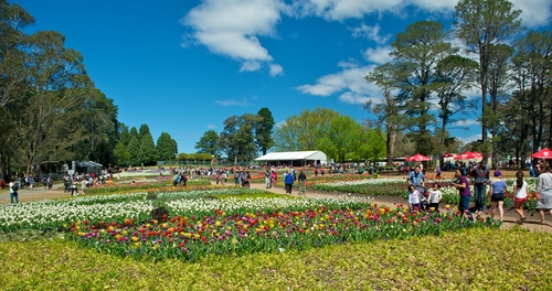 Lawns and gardens at the Canberra Floriade Festival