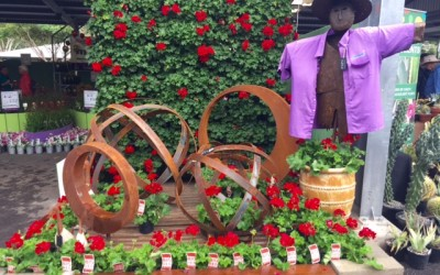 Top 10 Sights at the Queensland Garden Expo 2015