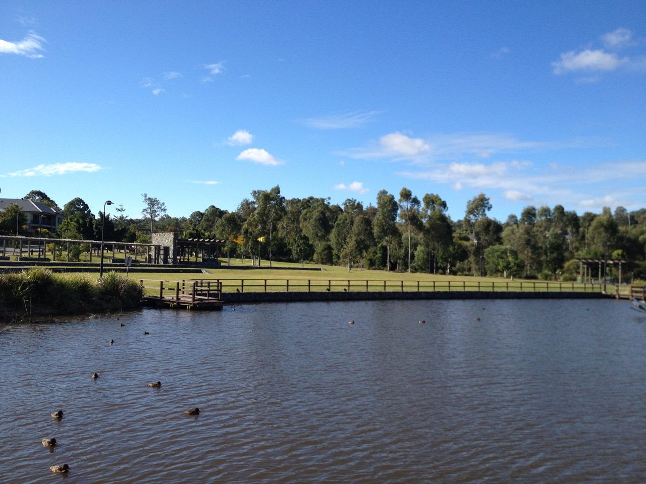 The lake and pre-requisite ducks at Tallowwood Park © GreenSocks