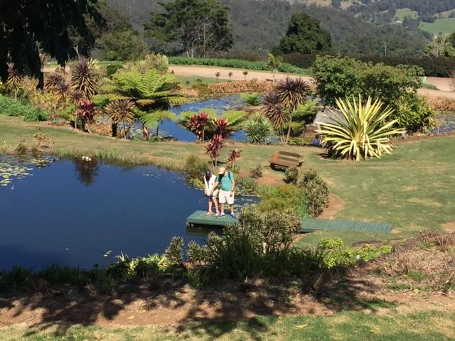 Maleny Botanic Gardens, Sunshine Coast, Queensland © GreenSocks