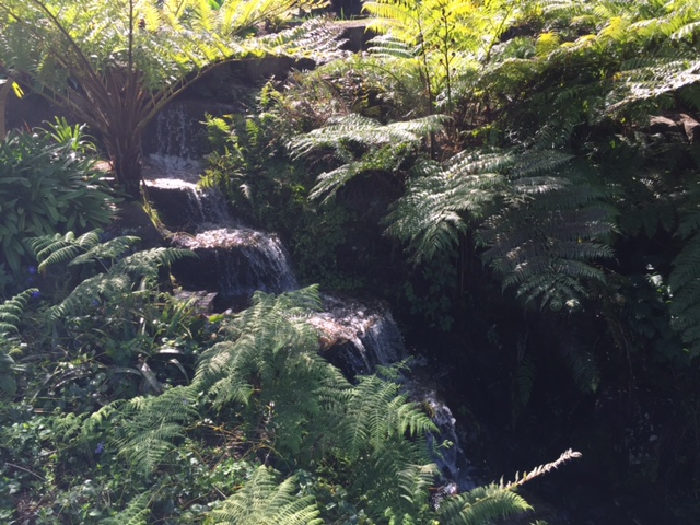 A sneaky waterfall at the Maleny Botanic Gardens © GreenSocks