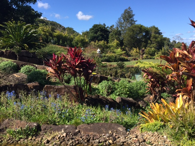 Maleny Botanic Gardens, Sunshine Coast, Queensland © GreenSocks