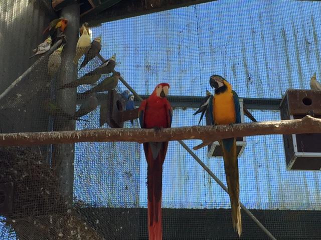 Maleny Bird World, Sunshine Coast, Queensland © GreenSocks