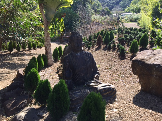Oriental-Inspired Garden at Maleny Botanic Gardens, Sunshine Coast, Queensland © GreenSocks