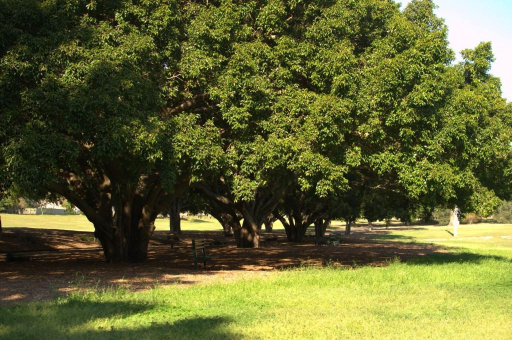 Lawn Mowing-Yeronga Memorial Park-1