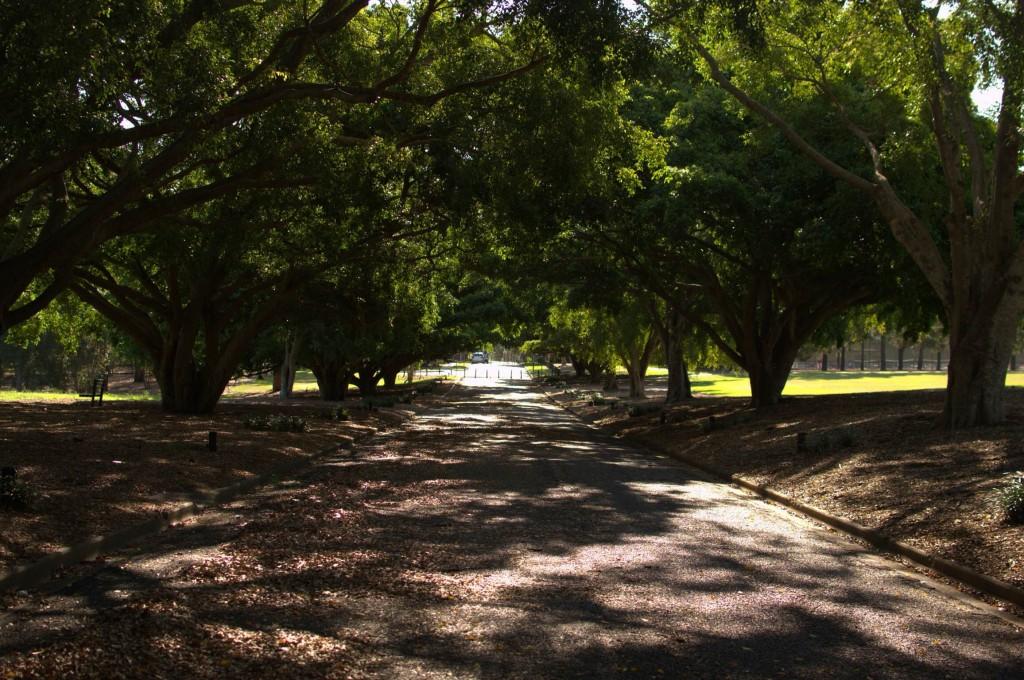 Lawn Mowing-Yeronga Memorial Park-2