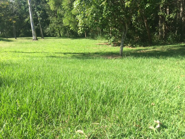 Overgrown, lush, green grass. Perfect for our Brisbane lawn mowing photoshoot! © GreenSocks