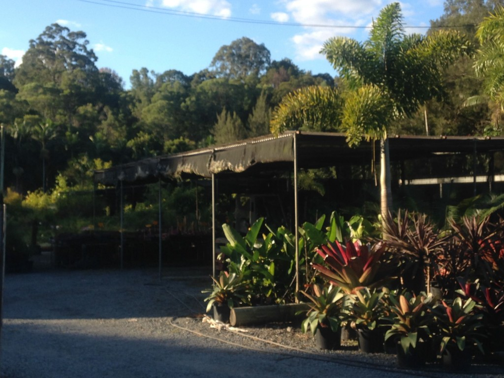 Want some more plants for your garden or backyard lawn area? Berrigans Road Nursery, Mudgeeraba © GreenSocks
