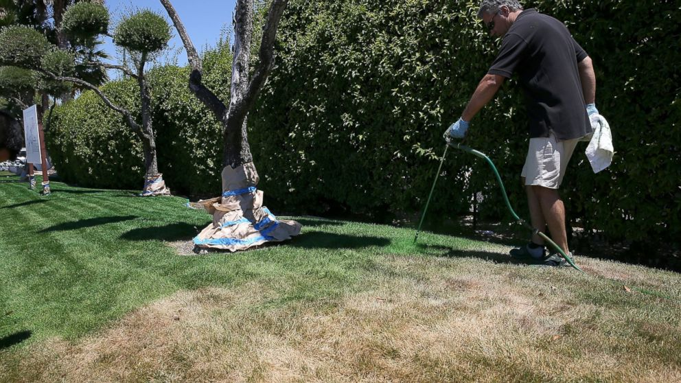 Thought about lawn painting for your lawn? Image credit: abcnews.go.com