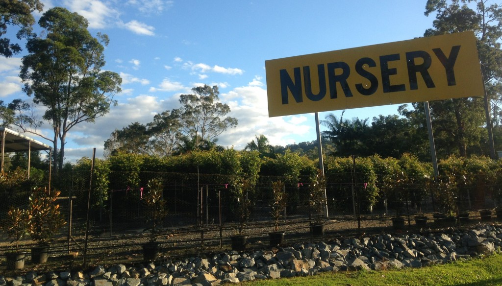 Afer you've had your lawn mowed in Mudgeeraba, why not visit Horseshoe Drive Nursery? © GreenSocks