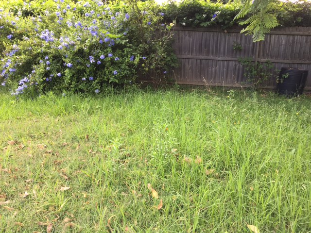 """""""Before"""" photo of Northmead lawn mowing © GreenSocks"""