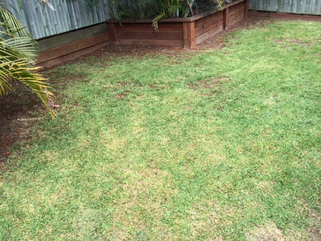 """""""After"""" photo of mowing in West End © GreenSocks"""