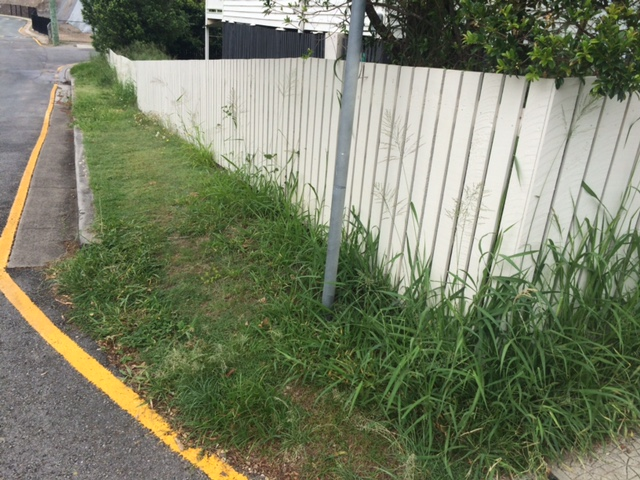 """""""Before"""" photo of a lawn mowed in Windsor © GreenSocks"""