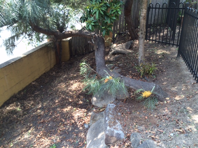 """After"" photo of weeding job in Riverhills © GreenSocks"