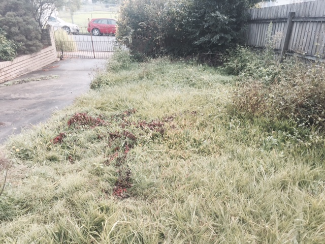 """Before"" photo of Manly lawn mowing services © GreenSocks"