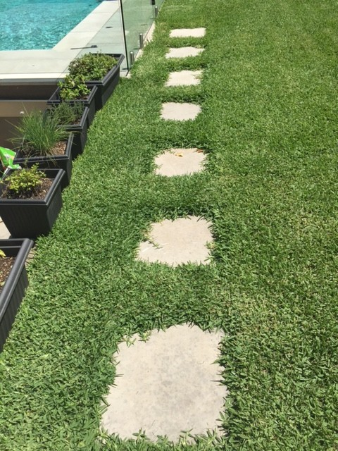 """Before"" photo of Lane Cove lawn mowing and edging job © GreenSocks"