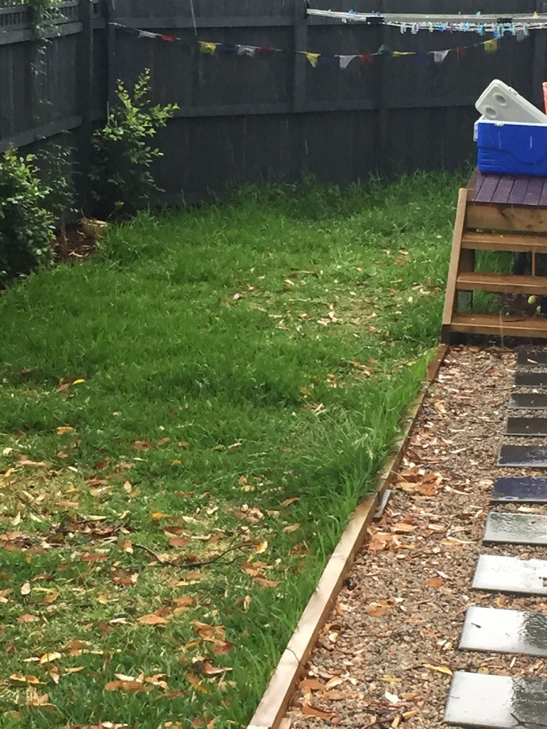 """""""Before"""" photo of lawn mowing Manly Vale © GreenSocks"""