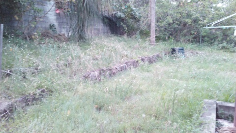"""Before"" photo of lawn mowing services Taringa © GreenSocks"