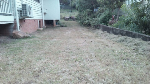 """After"" photo of lawn mowing services Taringa (before clippings tidied up) © GreenSocks"