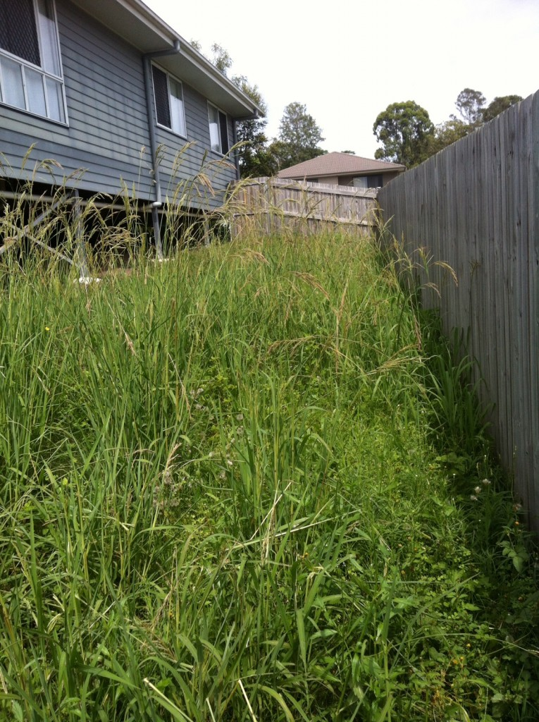 "A sample ""before"" photo of the Goodna lawn mowing jobs our providers service © GreenSocks"
