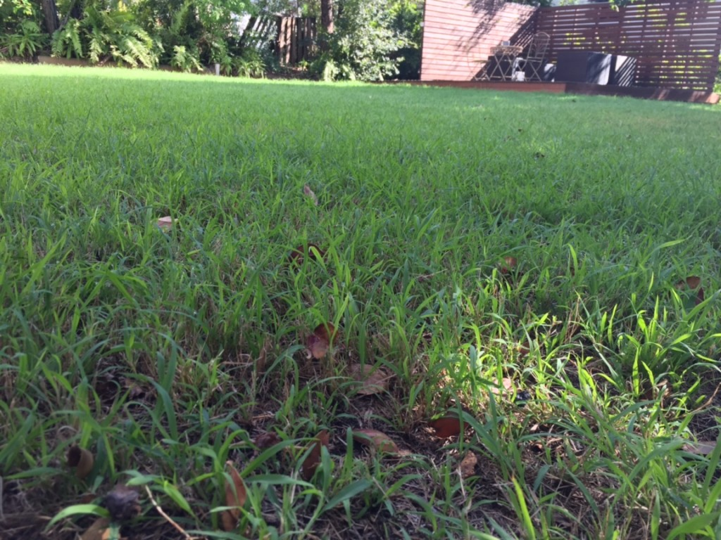 """Before"" photo of Albion lawn mowing © GreenSocks"