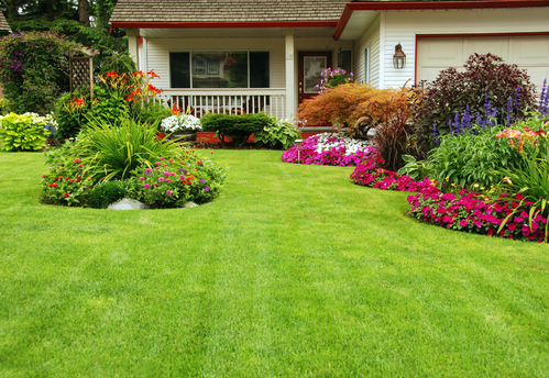 8 Tips For a Healthy Lawn