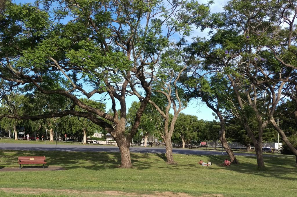 Downey Park Windsor and Wilston © GreenSocks