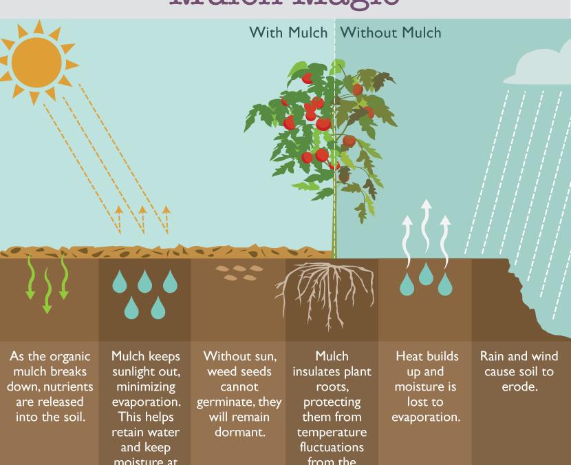 Can Mulch Prevent Weeds in Your Garden?