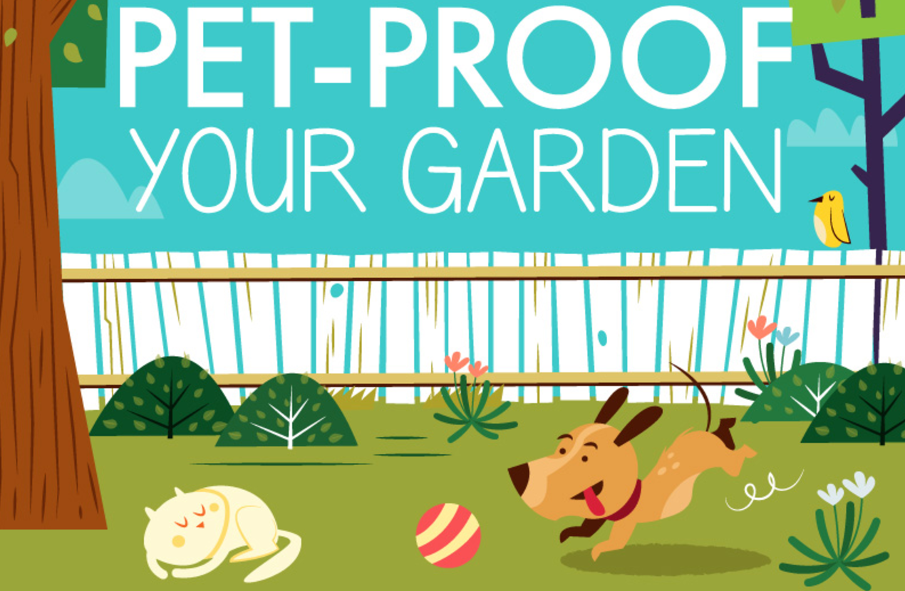 3 Steps to a Pet Friendly Garden